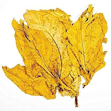 VISTARIC 100 YUCCA (Soapweed/Soapwell/Bärgras/Great Plains Yucca) Yucca Glauca Blumensamen von Seedville