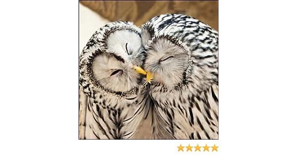 Blank // Birthday Greeting Card WDM7214 Little Kissing Owls RSPB