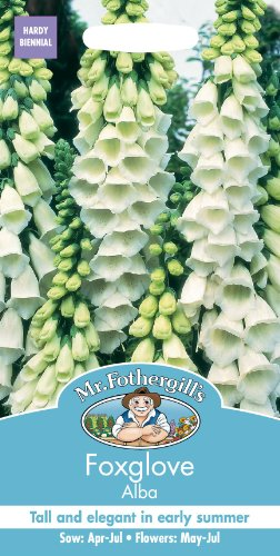 Unbeheizte Schale (Mr Fothergills Pilzsporen, Blume Fingerhut Alba 1000 Samen)
