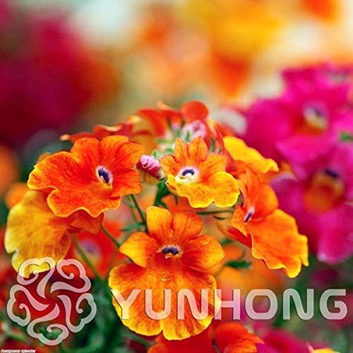AGROBITS IM ANGEBOT !!!! 100pcs Drachen Gesichts-Blumen Bonsai Seltene schöne Blume Bonsai Haus und Garten (Nemesia Strumosa): MIX