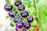 Bosque Blue Tomate mit blauen Früchten -5 Samen