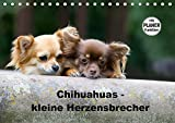 Chihuahuas - kleine Herzensbrecher (Tischkalender 2019 DIN A5 quer): Wunderschöne Outdoor Fotos der kleinen Hunderasse (Geburtstagskalender, 14 Seiten ) (CALVENDO Tiere)