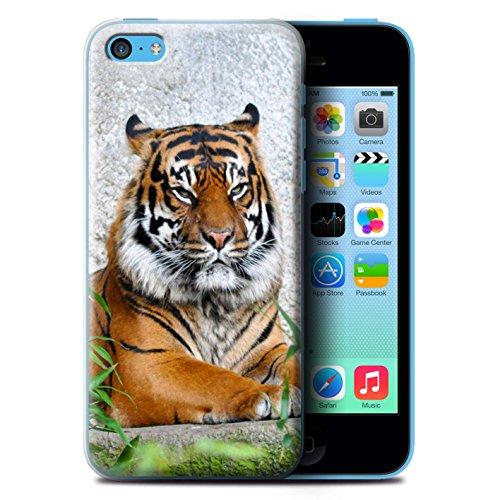 Coque de Stuff4 / Coque pour Apple iPhone 5C / Panda Design / Animaux Sauvages Collection Tigre