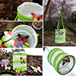 sgerste 14 x 15cm/30 x 35cm praying mantis/stick insect/butterfly/cylinder style pop up cage green - 14x15cm SGerste 14 x 15cm/30 x 35cm Praying mantis/Stick Insect/butterfly/Cylinder Style Pop Up Cage Green – 14x15cm 51dT5sKeYML