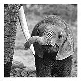 Bilderwelten Glasbild - Elefantenbaby - Quadrat 1:1, Größe HxB: 50cm x 50cm