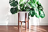 #10: Modern Plant Stand, Hand Made in india, Home Decor (rust free and strong ) long life