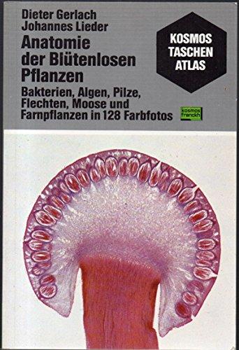 Preisvergleich Produktbild Anatomie der Blütenlosen Pflanzen. Bakterien, Algen, Pilze, Flechten, Moose und Farnpflanzen