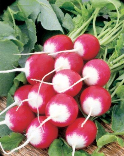 Radies Radieschen zweifarbig Halbrot Halbweiß Samen