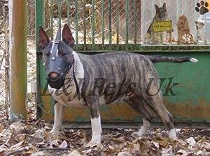 Muselière en cuir pour chien Bull Terrier clair et autres Museau