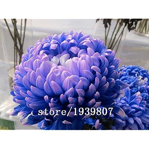 150pcs / bag caliente venta de perfumes Purple Wisteria enredaderas semillas de flores para el castillo de bricolaje macetas jardineras jardín de casa