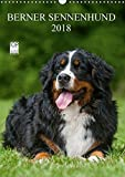 Berner Sennenhund 2018 (Wandkalender 2018 DIN A3 hoch): Berner Sennenhunde auf 13 wundervollen Fotos (Monatskalender, 14 Seiten) (CALVENDO Tiere) [Kalender] [Apr 01, 2017] Starick, Sigrid