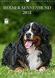 Berner Sennenhund 2018 (Wandkalender 2018 DIN A3 hoch): Berner Sennenhunde auf 13 wundervollen Fotos (Monatskalender, 14 Seiten ) (CALVENDO Tiere) [Kalender] [Apr 01, 2017] Starick, Sigrid - Sigrid Starick