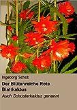 Der Blütenreiche Rote Blattkaktus: Auch Schusterkaktus Genannt
