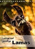 Lustige und gesellige Lamas 2018 (Tischkalender 2018 DIN A5 hoch): Liebevoll gestaltete Lama Fotografien. (Geburtstagskalender, 14 Seiten ) (CALVENDO Tiere) [Kalender] [Apr 01, 2017] Mentil, Bianca