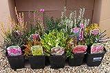 Portal Cool Brezos Colección para el Año Color, Seis Plantas