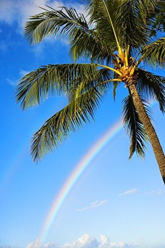 The Poster Corp Dana Edmunds/Design Pics - Hawaii Oahu Honolulu ALA Moana Beach Park Palm Tree and Rainbow Photo Print (33,02 x 50,80 cm)