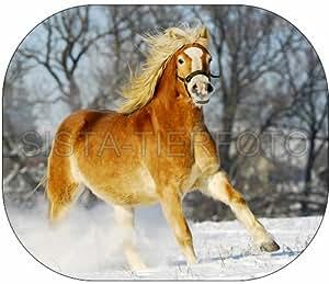 Sonnenschutz, Sonnenblende Haflinger, Pferd, Pferde