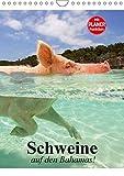 Schweine auf den Bahamas! (Wandkalender 2018 DIN A4 hoch): Schwimmende Schweine im Dauerurlaub auf den Bahamas (Planer, 14 Seiten ) (CALVENDO Tiere) [Kalender] [Apr 01, 2017] Stanzer, Elisabeth - Elisabeth Stanzer
