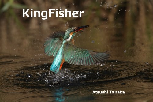 kingfisher-japanese-edition
