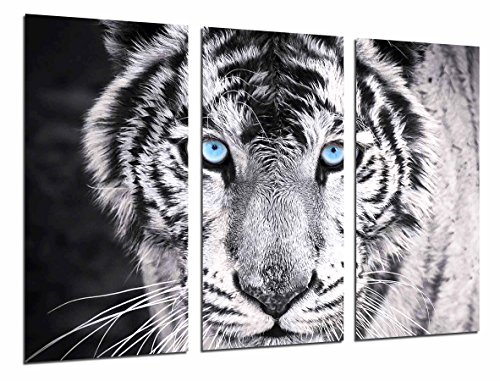 Cuadro Moderno Fotografico Tigre Blanco y Negro, Ojos Azules, Animales, 97 x 62 cm, Ref. 26618