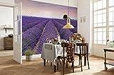 Komar - Vlies Fototapete PROVENCE - 368 x 248 cm - Tapete, Wand, Dekoration, Wandbelag, Wandbild, Wanddeko, Frankreich, Lavendelblüten, Landschaft - XXL4-036