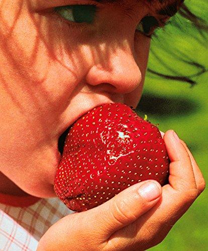 Soteer Garten - Zuckersüss Riesen Erdbeere Samen großfruchtig Kletternpflanzen Samen für Garten und Balkon Topf usw. (Samen Erdbeere)