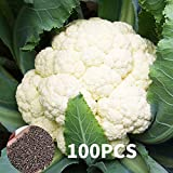 AGROBITS 100pcs / g Japón junquillo de floración s Bonsai Flowes jardín