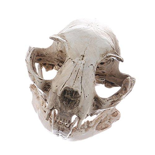 sharprepublic Realistische Katzen Schädel Replik Skelette Modell Halloween Party Dekor