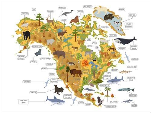 Poster 40 x 30 cm: Zoologie Nordamerika von Kidz Collection/Editors Choice - Hochwertiger Kunstdruck, Kunstposter