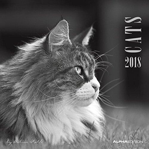 Cats 2018 - Katzen - Broschürenkalender (30 x 60 geöffnet) - schwarz/weiß - Tierkalender - Wandplaner: by Sabine Rath