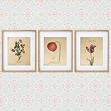 Pack de láminas RED ONE. Posters con imágenes de botánica. Decoración de hogar. Láminas para enmarcar. Papel 250 gramos alta calidad