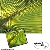 Set Regalo: 1 Póster Impresión Artística (50x40 cm) + 1 Alfombrilla Para Ratón (23x19 cm) - Palmas, Hoja De Palmera De Cáñamo