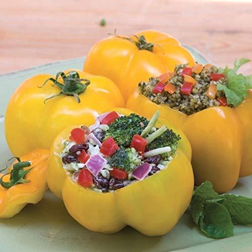 GETSO Samen-Paket: 5 - Samen: Organische Yellow Stuffer Tomatensamen - eine sehr einzigartige Gourmet Tomaten! Kräftiges !!!