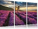 Traumhafte Lavendel Provence mit einsamen Baum 3-Teiler Leinwandbild 120x80 Bild auf Leinwand, XXL riesige Bilder fertig gerahmt mit Keilrahmen, Kunstdruck auf Wandbild mit Rahmen, gänstiger als Gemälde oder Ölbild, kein Poster oder Plakat