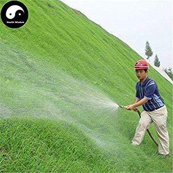 Potseed Keimfutter: 500 Stück: Kaufen Evergreen Zoysia Japonica Samen Pflanze Hangsicherung Rasen Gras - Zoysia Gras