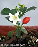 #9: Flower Seeds : Small, White, Scented Flowers Jasmine Seeds - 10 Seeds by Creative Farmer