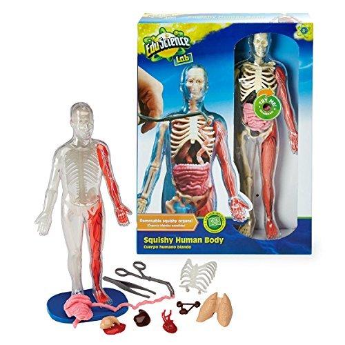 Edu Science Lab Squishy Mensch Körper (Squishy Menschlichen Körper)