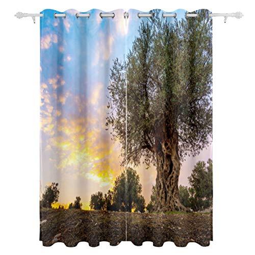 KAOROU Olive Olive Trees In Olive Gardens Dekorative Hängende 2 Panel Set Gedruckt Blackout Fenster Vorhänge Für Schlafzimmer Wohnzimmer Esszimmer Fenster Vorhänge 54x84 Zoll Vorhang