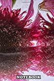 Notebook: Blossoms Of Echinacea In Crystal Clear Ice , Journal for Writing, College Ruled Size 6
