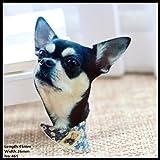El nuevo envío libre 1pcs del perro encantador de acrílico Accesorios de Moda de dibujos animados broche insignia del Pin regalo de la joyería del collar broche, tela para mascotas, 465
