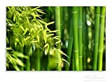 Wallario Herdabdeckplatte / Spritzschutz aus Glas, 2-teilig, 80x52cm, für Ceran- und Induktionsherde, Motiv Bambuswald mit grünen Bambuspflanzen