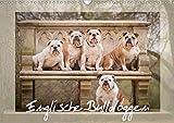 Englische Bulldoggen (Wandkalender 2020 DIN A3 quer): Schnuten zum verlieben - Englische Bulldoggen (Monatskalender, 14 Seiten ) (CALVENDO Tiere)