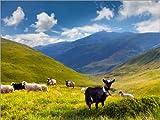 Posterlounge Leinwandbild 160 x 120 cm: Herde von Schafen und Ziegen in Den Bergen von Editors Choice - fertiges Wandbild, Bild auf Keilrahmen, Fertigbild auf Echter Leinwand, Leinwanddruck
