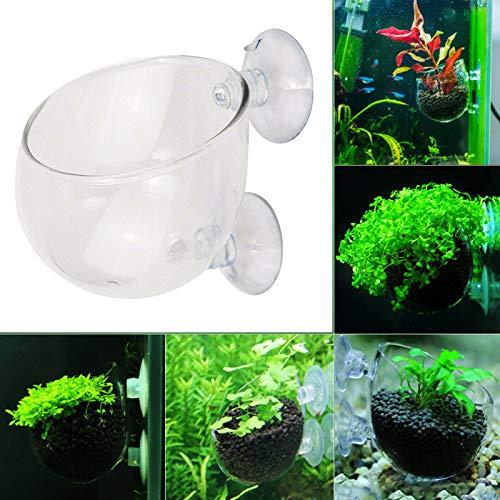 Urijk Aquarium Rund Klar Kristallglas Zubehör Fisch Tank Blumentopf Pflanze Becherhalter zum Aufhängen Landschaften Tassen