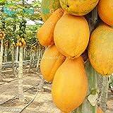 Shopmeeko Mix Mini Bonsai 30pcs / bag Mehrjährige Früchte Papaya Pflanzen Melone Pawpaw Pflanzen Diy Home Plant Bonsai Obstbaum Bonsai * Garten Se: Light Green