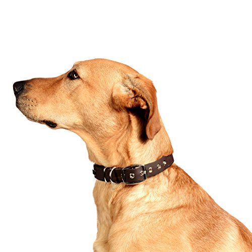 PetTec Comfortable Dog Collar, Permanent & Robust; Made with Strong, Tear Resistant Trioflex, Perfect Size for Big or Small Dogs, Great Fit with Padding Weatherproof and Waterproof (Brown)