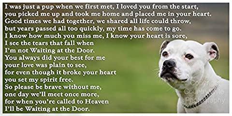 Staffordshire Bull Terrier White Staffy bereavement pet dog loss sympathy