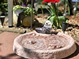 Vogeltränke Vogelbad Wasserstelle Vogelbecken Schildkröte Rot mit Vogel