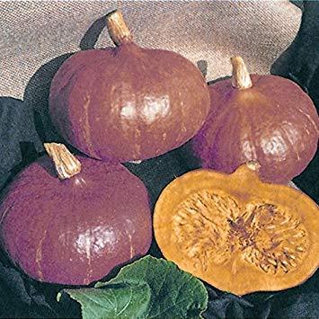 SANHOC Samen-Paket: Squash - Uchiki Kuri - 15 SeedsSEED
