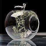 Bluelover Apple Forma Fiore Vaso Moss Micro Paesaggio Eco Bottiglia di Vetro